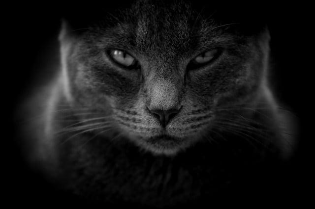 chat qui marque son territoire
