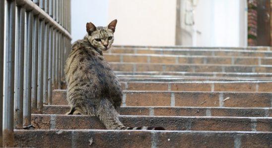 un chat craintif