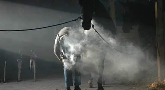 comment ferrer un cheval