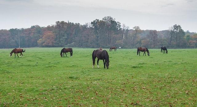 des chevaux dans un pré