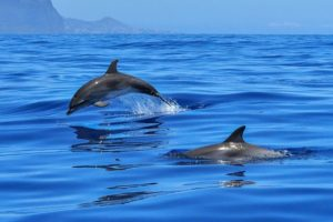 deux dauphins dans la mer