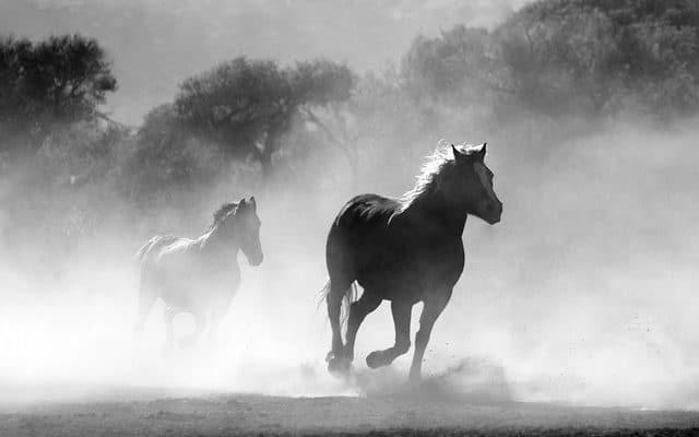 des chevaux de course
