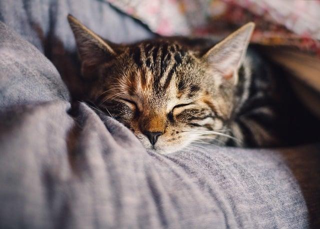 litière de chats