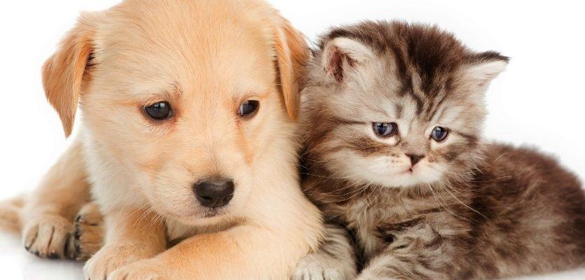 chien et chat cote a cote