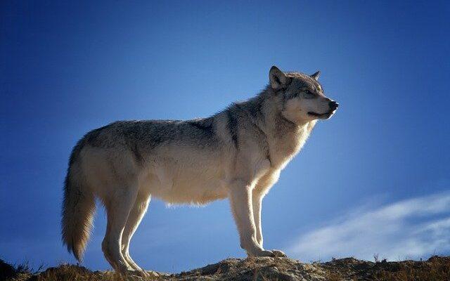 chien sur une montagne