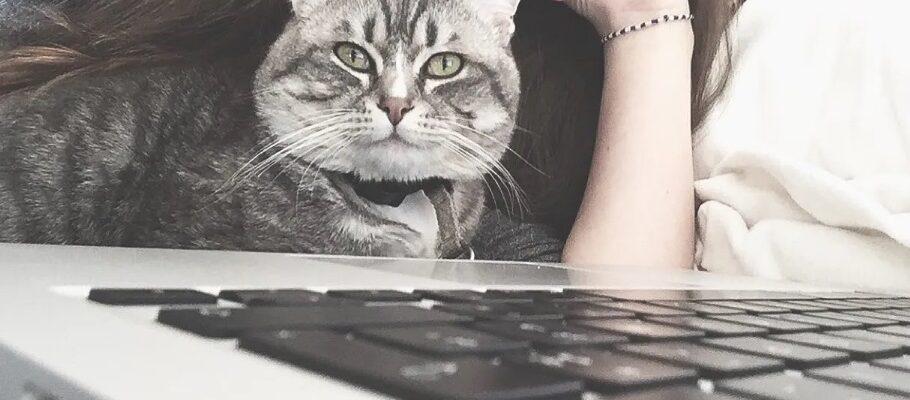 chat devant un ordinateur