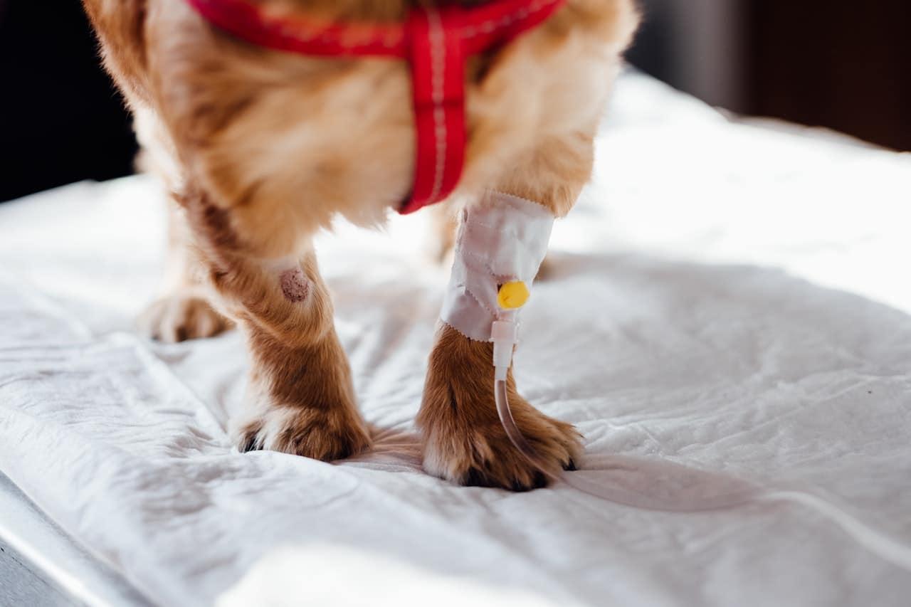 Nécessité de prendre une assurance pour chien lors d'une visite chez le vétérinaire