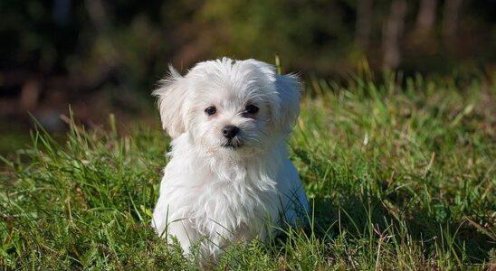 chien heureux dans l'herbe