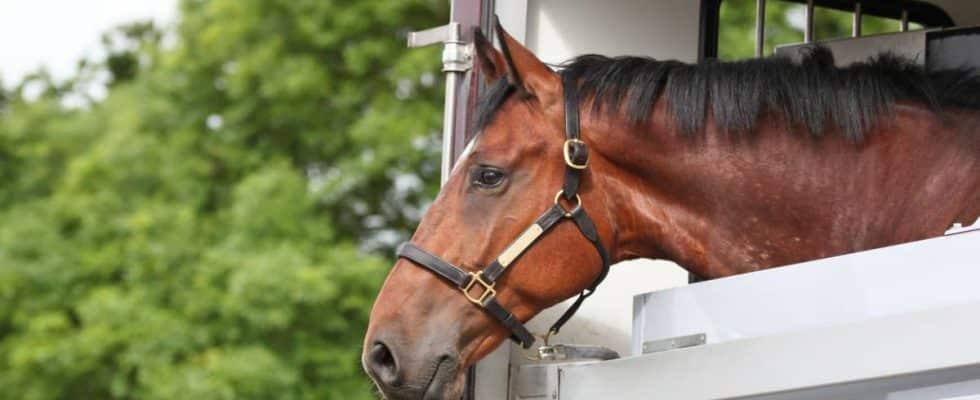 cheval dans son box